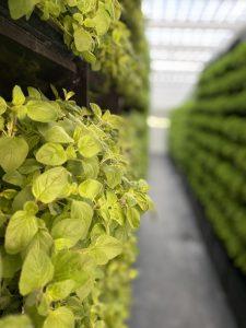 Indoor-Farming Bubenheim