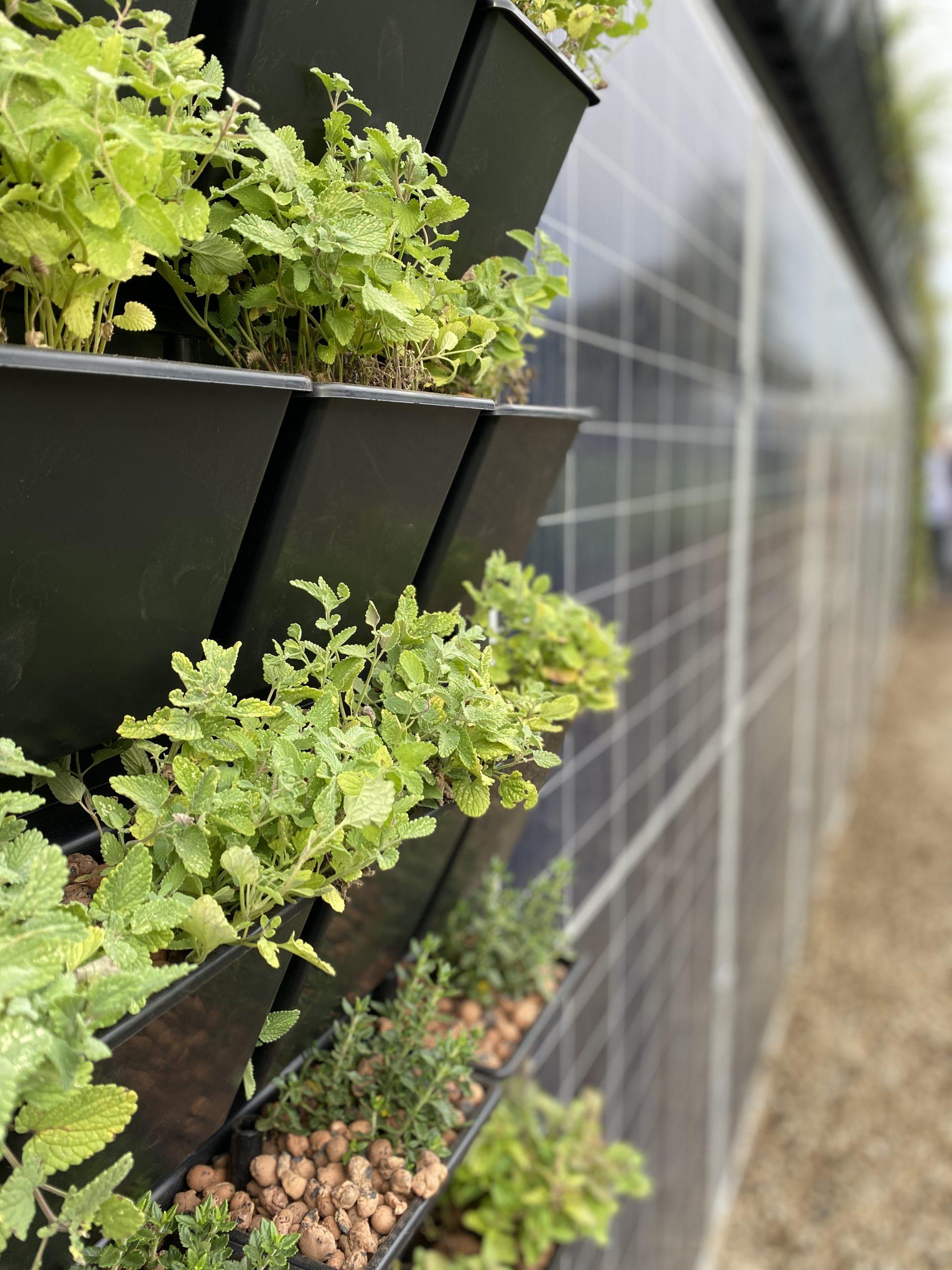 Photovoltaik und Indoor-Farming revolutionieren die Landwirtschaft / Pixabay