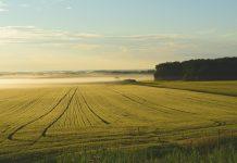 Konventionelle Landwirtschaft versus alternative Anbauverfahren